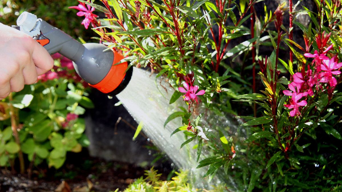 Watering plants while away on vacation: how to keep the garden watered