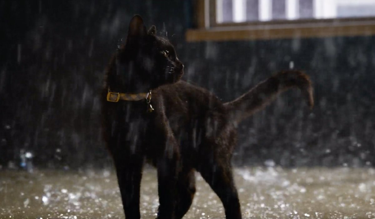 A black cat standing on the sidewalk in the rain in The Matrix Resurrections.
