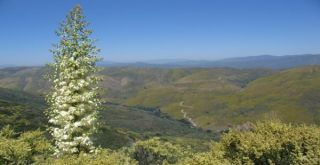 angeles-national-forest-110603
