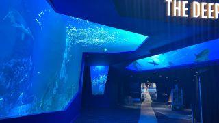 LED walls simulate an underwater experience at the Georgia Aquarium