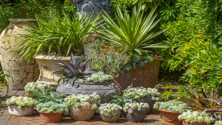 cottage garden shrubs in plant pots on a patio