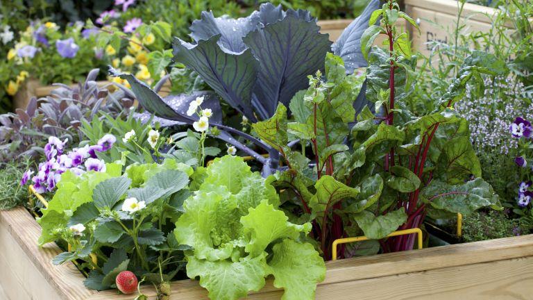 Small Vegetable Garden Ideas 10 Layout, How To Make A Small Backyard Vegetable Garden