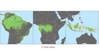 A new study has shown how satellite data can help to reduce deforestation. This image shows forest cover (shown in green) in Africa, Asia and South America.