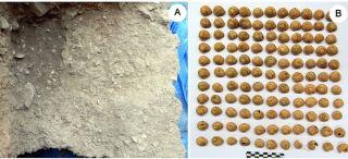 paleolithic snails