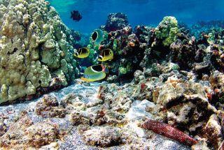 Hawaii reef