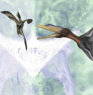 Darwinopterus and tiny flying dinosaur