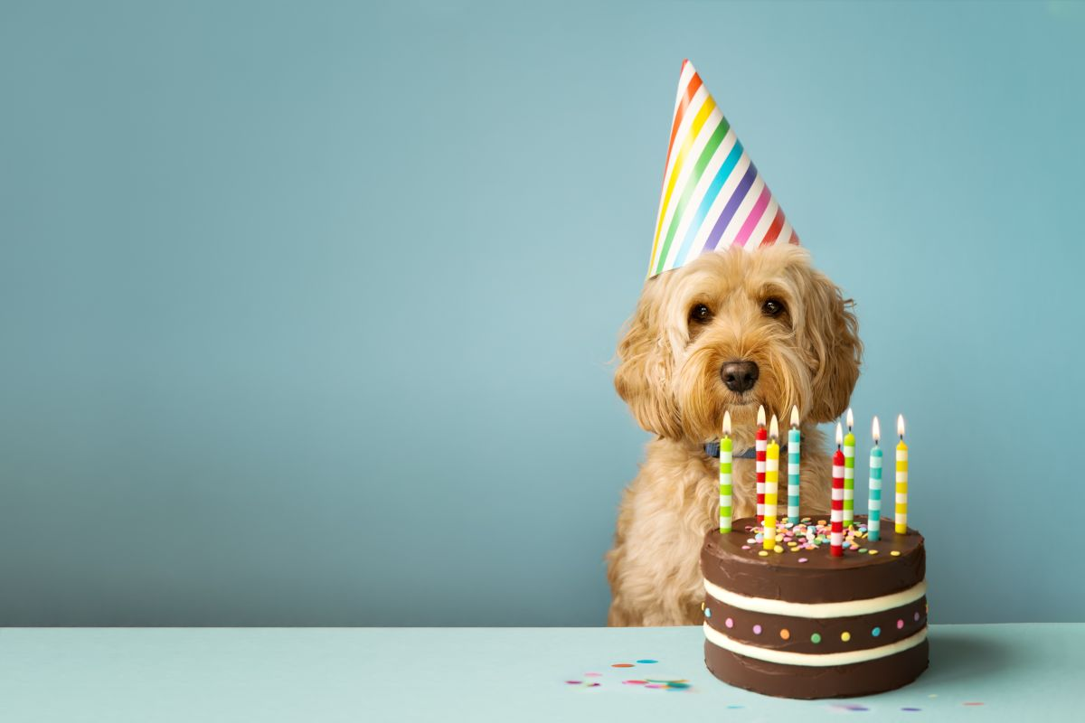 'Dog Years' Are a Total Myth. Here's How Old Fido Really Is.