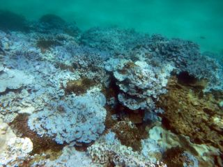 Bleached coral can be seen at Lisianski Island in Papahanaumokuakea Marine National Monument, in Hawaii, as documented during a NOAA mission in August 2014.