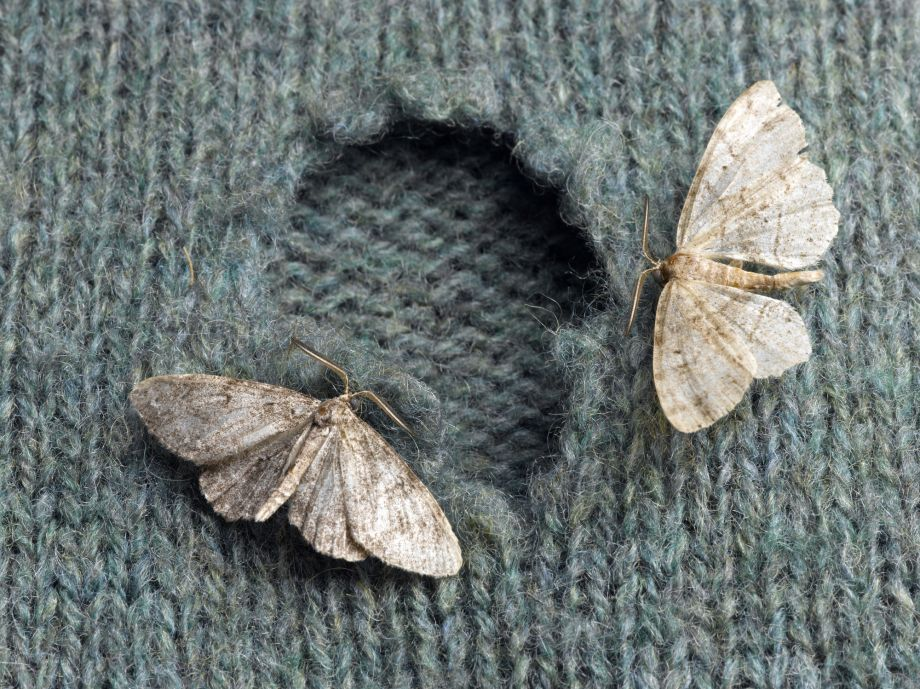 how to get rid of moths
