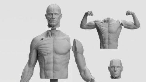 Different components of the male multipart kit, including the head, torso and arms