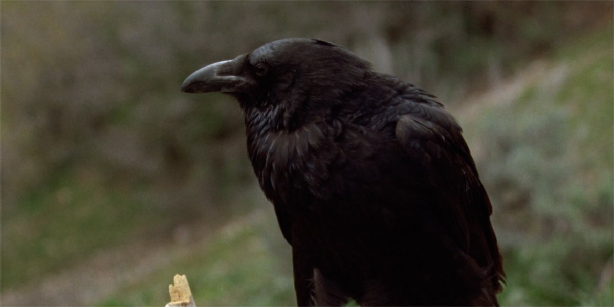 crow in THe Stand 1994 miniseries