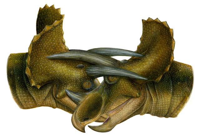 Triceratops Horns Used in Battle | Live Science