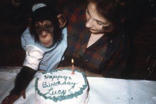 TV tonight Lucy, the Human Chimp