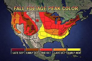 fall foliage, colors