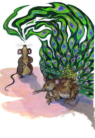 mouse pheromones