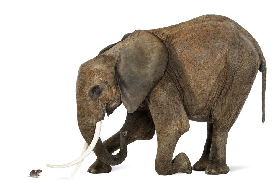 Are Elephants Really Afraid Of Mice Live Science