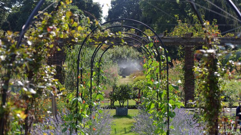using metal arches as climbing plant supports