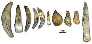 Neanderthal Beads