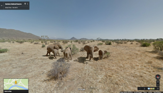 A family of elephants viewed with Google Street View.