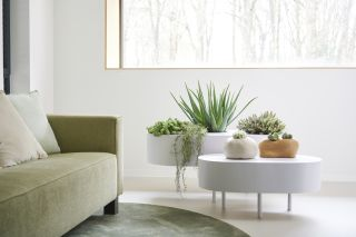 bright spaces and natural elements are key principles of biophilic design