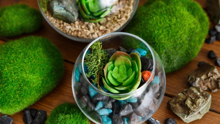 Composition of florariums and decorative moss stones
