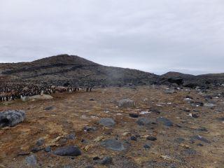 Penguin graveyard