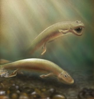 illustration of Tiktaalik roseae fish.