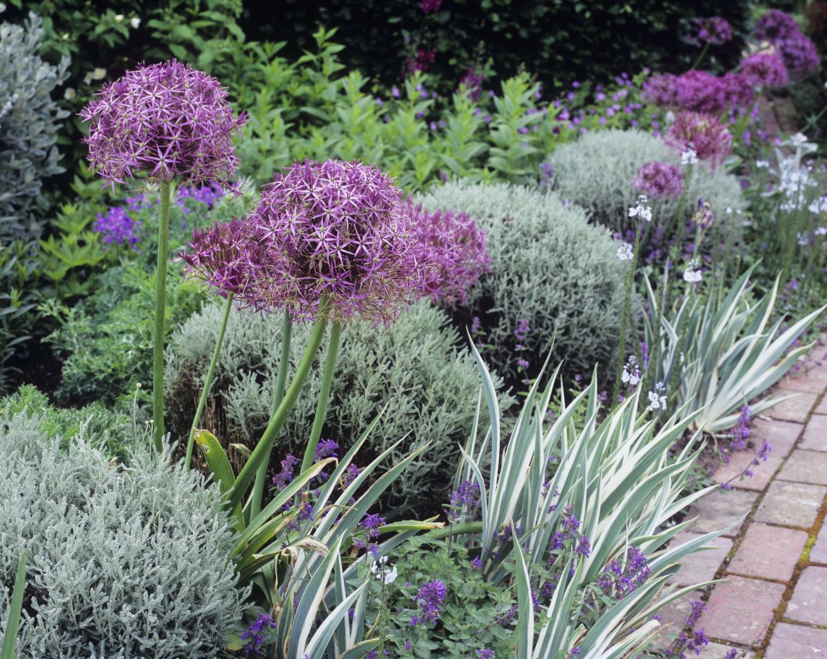 Garden Borders 24 Ideas For Planting