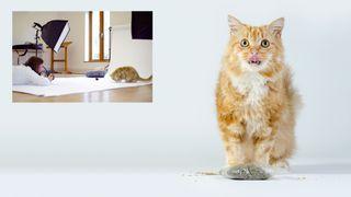 Home photography ideas: Capture cat portraits worthy of a studio