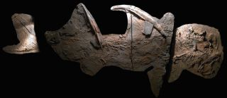 An ancient shark found in New Mexico