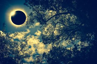 A total solar eclipse seen between leaves of a tree.