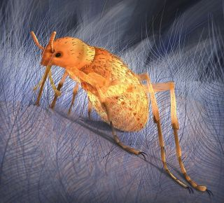 giant flea plagued dinosaurs