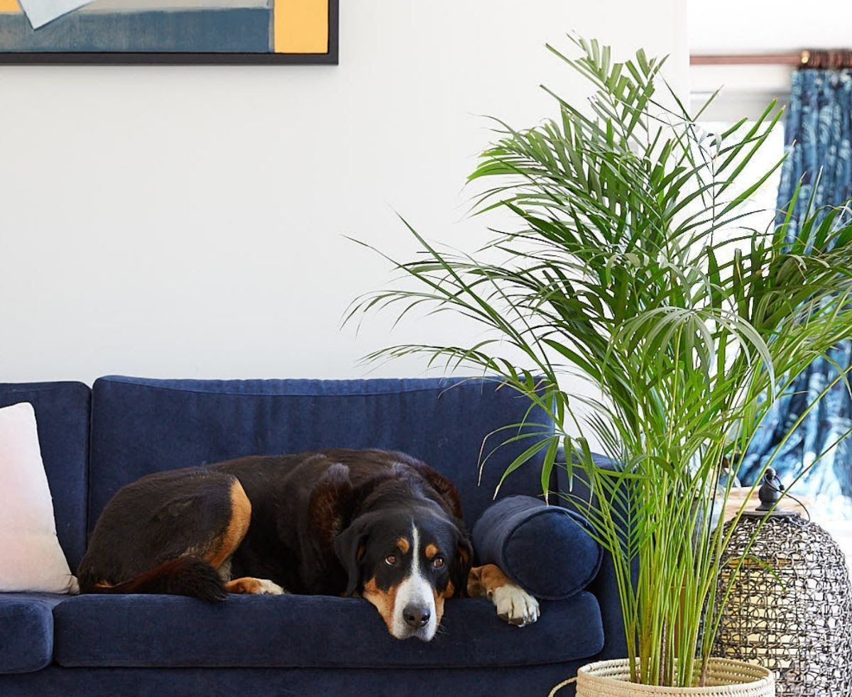 10 pet-friendly house plants – keep cats and dogs safe with non-toxic indoor plants