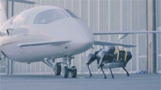 Robot dog pulling plane