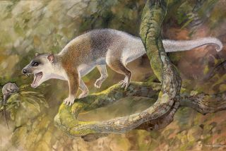 This ancient marsupial relative may not have actually been able to outcompete placental carnivores but rather developed in their absence.