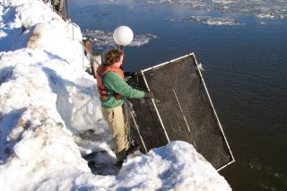 A box trap used to collect mature females. Photo shows typical wintertime conditions encountered at Hudson River collection sites.
