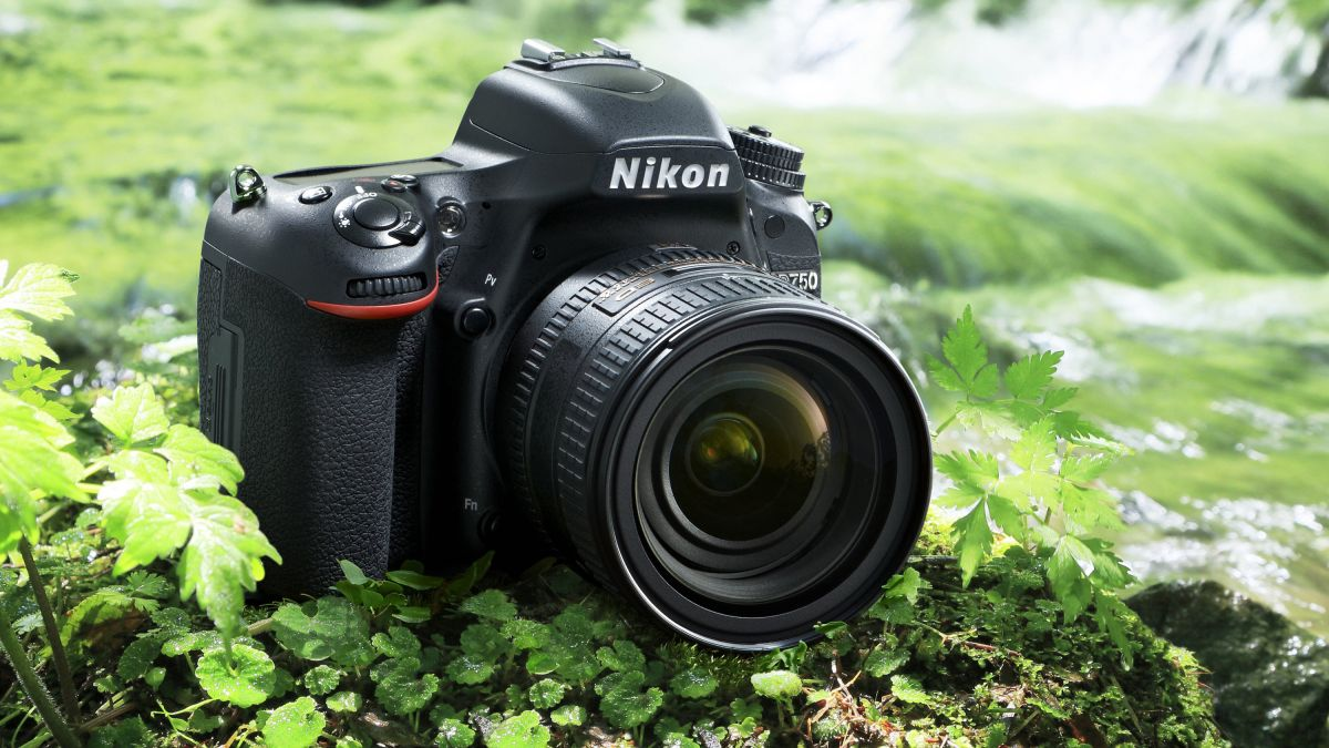 Best DSLR camera 2021: 12 great cameras to suit all budgets