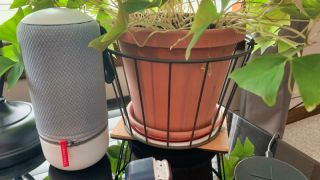 Libratone zipp in the plants