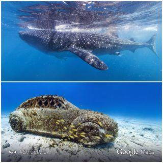 image of car and whale sharks captured with street view