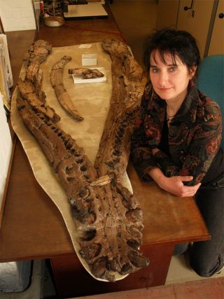 The old female pliosaur sported huge jaws (its lower jaw shown here with researcher Judyth Sassoon) and teeth about 8 inches (20 centimeters) long.
