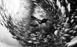 Black-and-white images dominate top All About Photo Awards 2020 winners