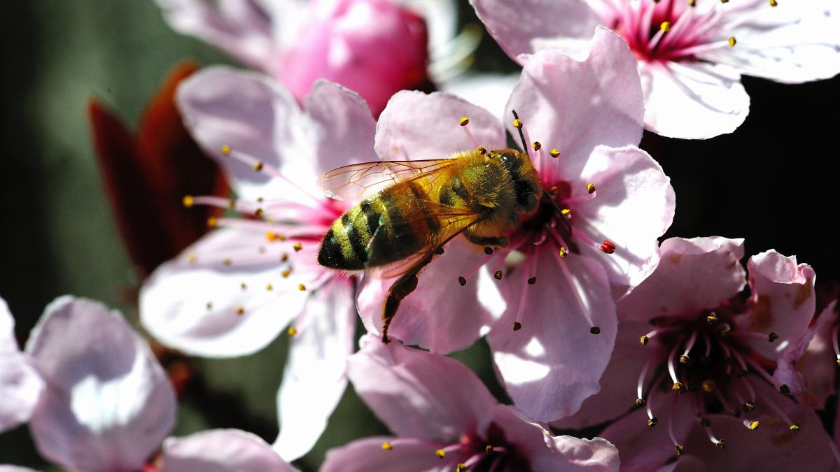 Beginner beekeeping is the new craze among gardeners