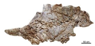 Local farmers unearthed the skeleton of an ankylosaur, now called <em>Chuanqilong chaoyangensis</em>, in Liaoning province in northeastern China.