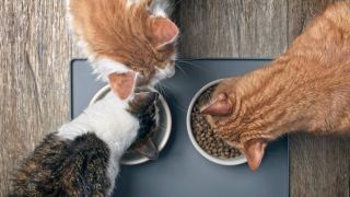 Feeding multiple cats in the same household