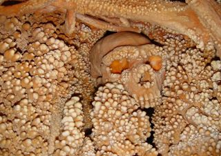 The remains of the so-called Altamura Man, now considered a Neanderthal, encrusted with calcite formations in Altamura, Italy.