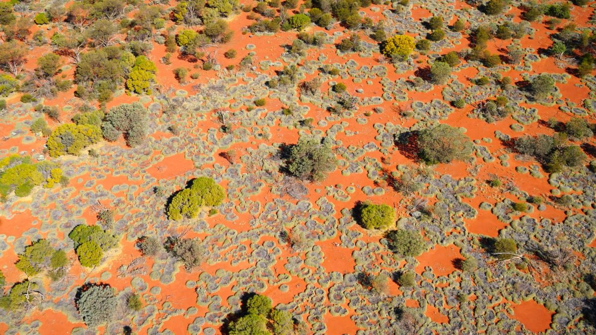 Source of mysterious 'fairy circles' found