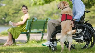 PAWS Act passed: service dog helps man in wheelchair