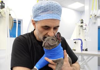 Professor Noel Fitzpatrick with Lexi The Supervet at Christmas
