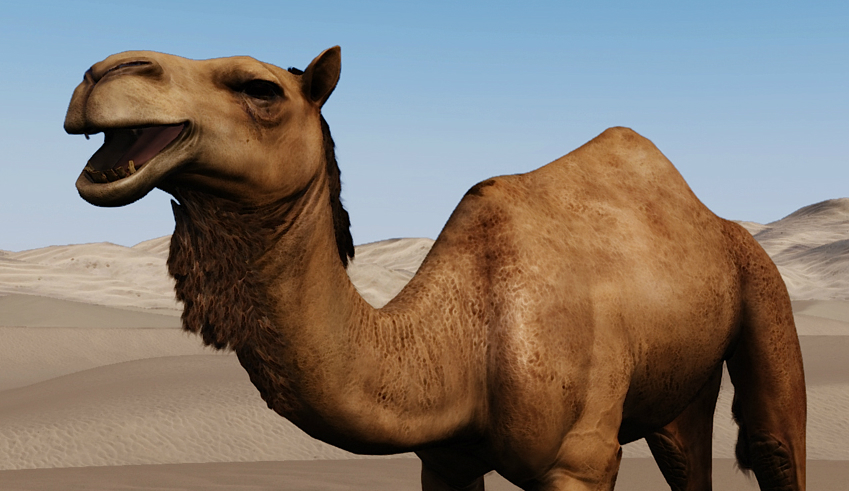 542c75da9be8 Mount   Blade 2  Bannerlord unveils camel mounts