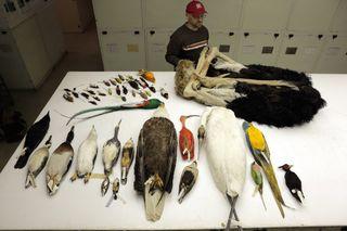 dead bird specimens